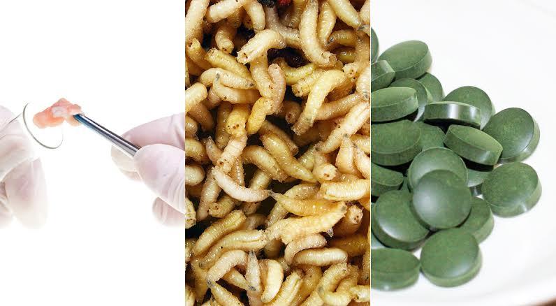 morceau de viande analysé, larves et comprimés alimentaires d'algues