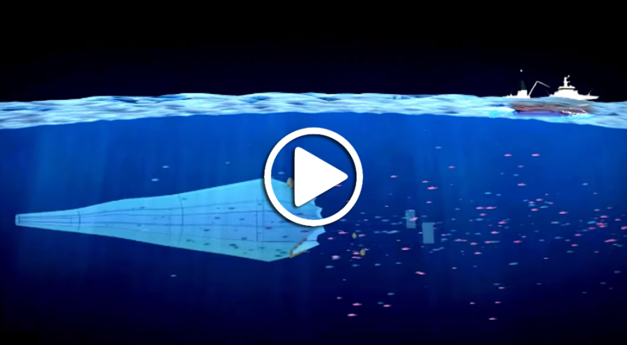 Film d'animation Greenpeace dénonçant la surpêche