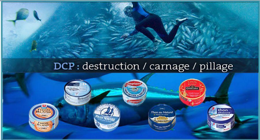 Marques françaises de thon en boîte classées par Greenpeace