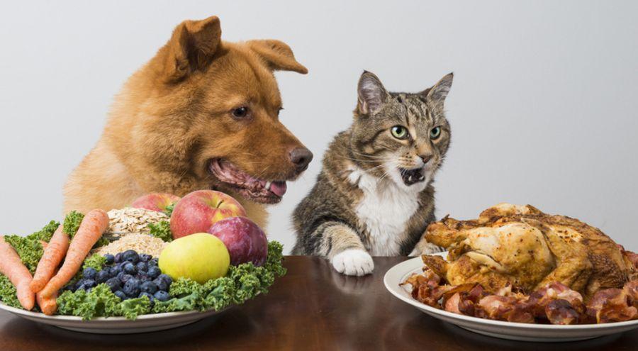 Un chien et un chat prennent leur repas