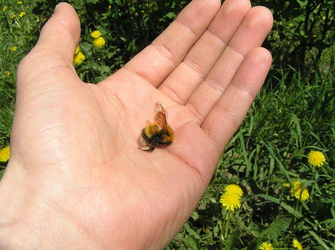 Hécatombe d'abeilles dans le Sud-Ouest, les apiculteurs appellent au don de ruches