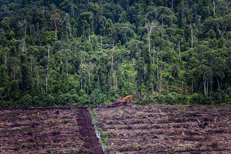 surface forestière déboisée