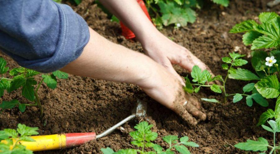 Plantation dans la terre