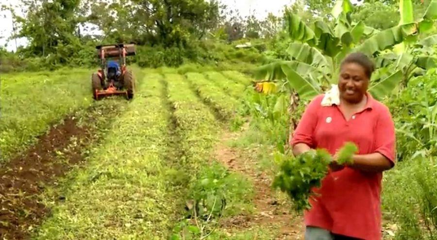 Femme samoane dans un champ bio