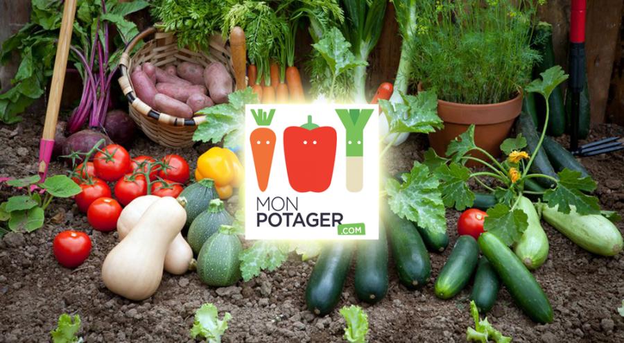 Packshot de légumes du potager