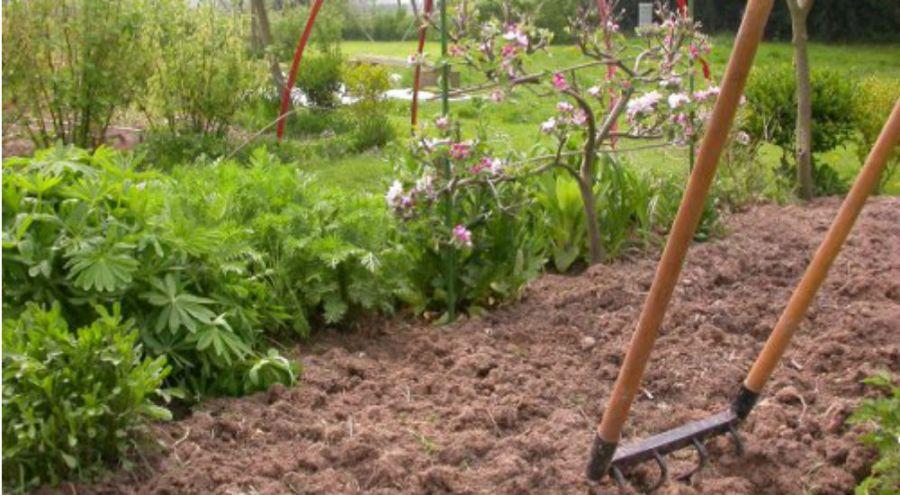 Grelinette plantée dans la terre