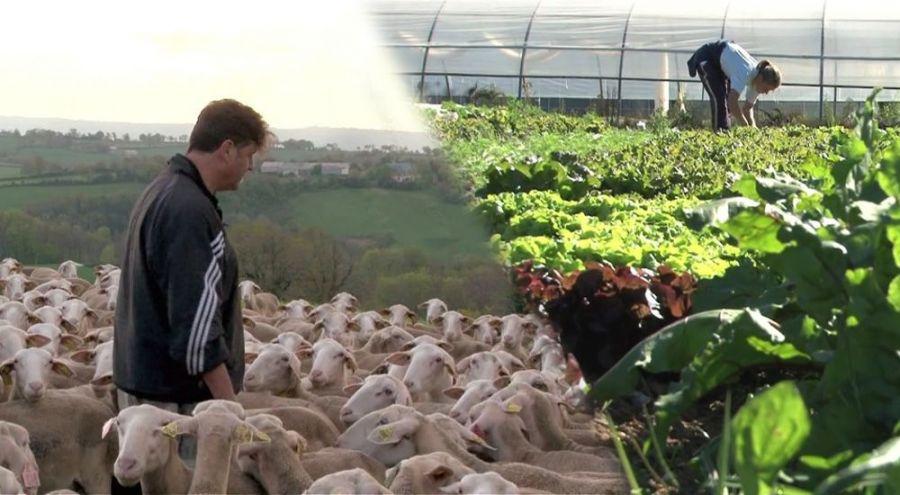 Plusieurs agriculteurs au travail dans leurs champs respectifs