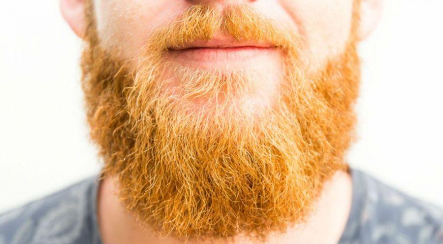 Une barbe d'un homme roux