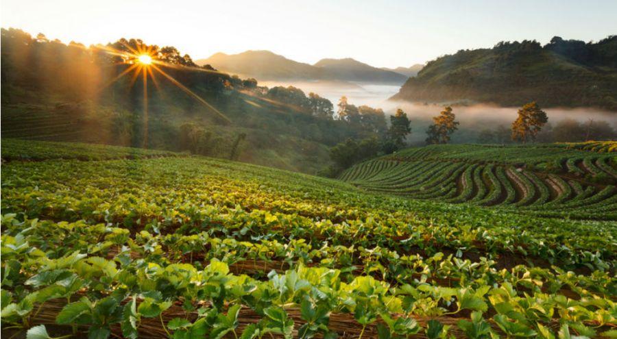 Champs cultivé et lever de soleil