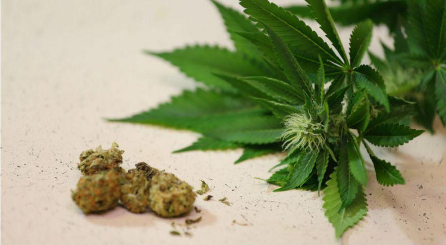 feuilles et boulettes de cannabis