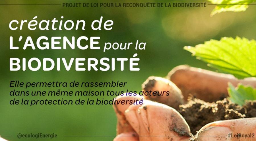 Titre sur la création de l'agence biodiversité