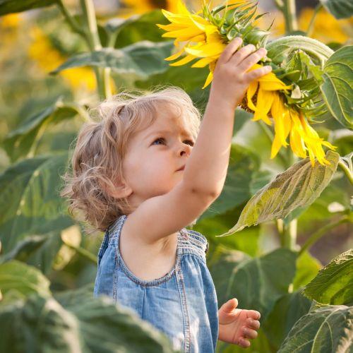 un enfant dans un champ cueille une fleur