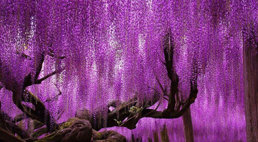 Nature: 16 arbres magnifiques et spectaculaires