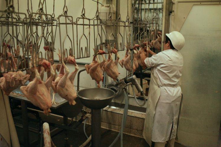 Une femme découpe une carcasse de volaille dans un abattoir