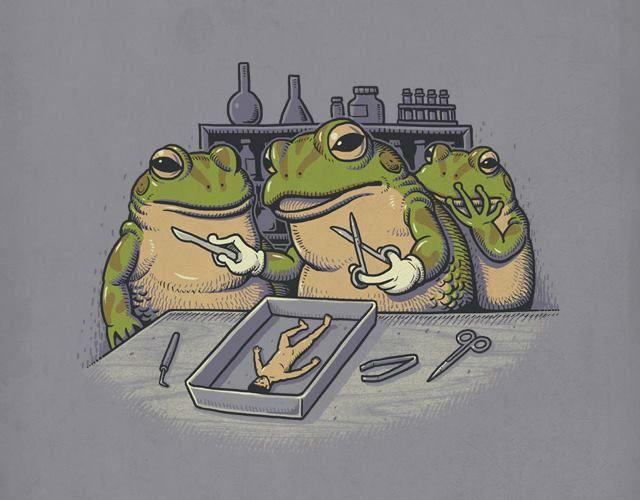 deux grenouillent ouvre le ventre d'un humain