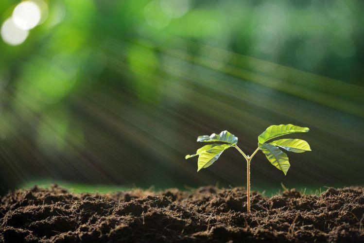 Une plante en train de pousser dans la terre