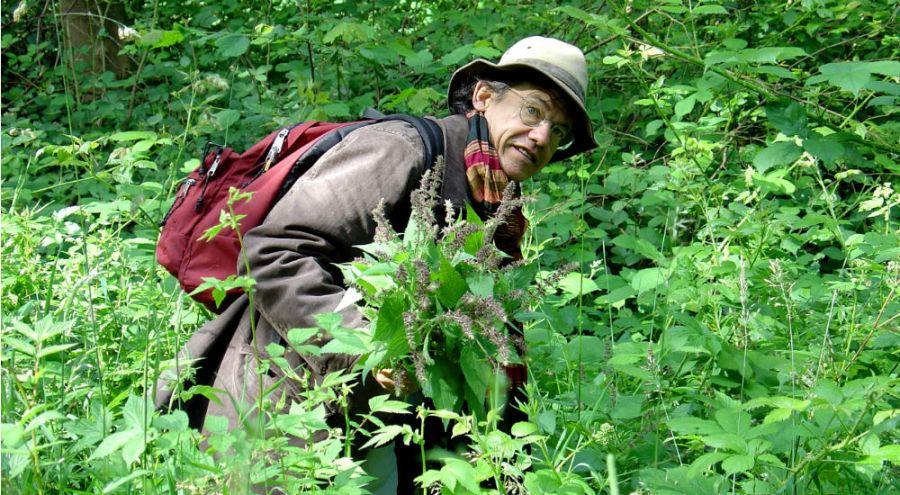 l'ethnobotaniste François Couplon dans les plantes sauvages