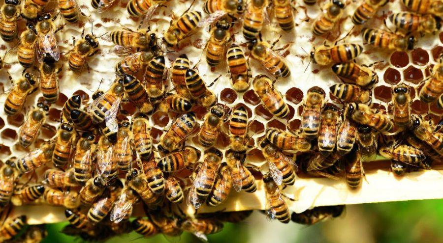 pleins d'abeilles