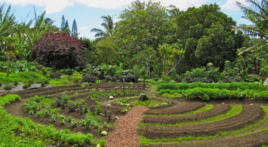 La permaculture dans la Ferme du Bec Hellouin