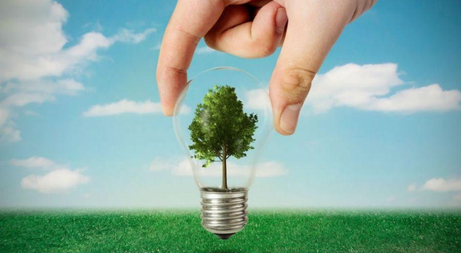 une main plante un arbre dans une ampoule