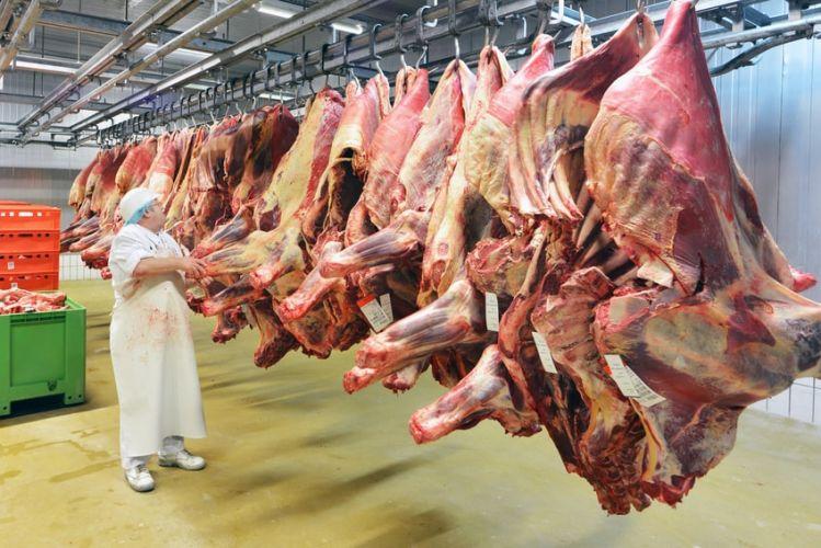 des animaux de boucherie pendus dans un abattoir