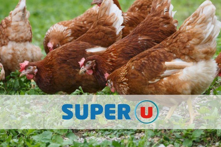 des poules d'élevage en plein air sous l'enseigne de la marque super U