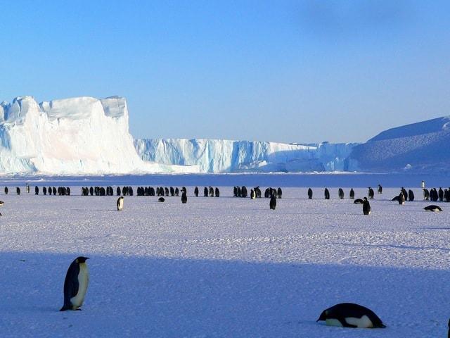 des pingouins sur une banquise