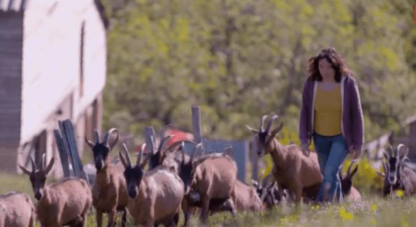 des citadins qui élèvent des chèvres