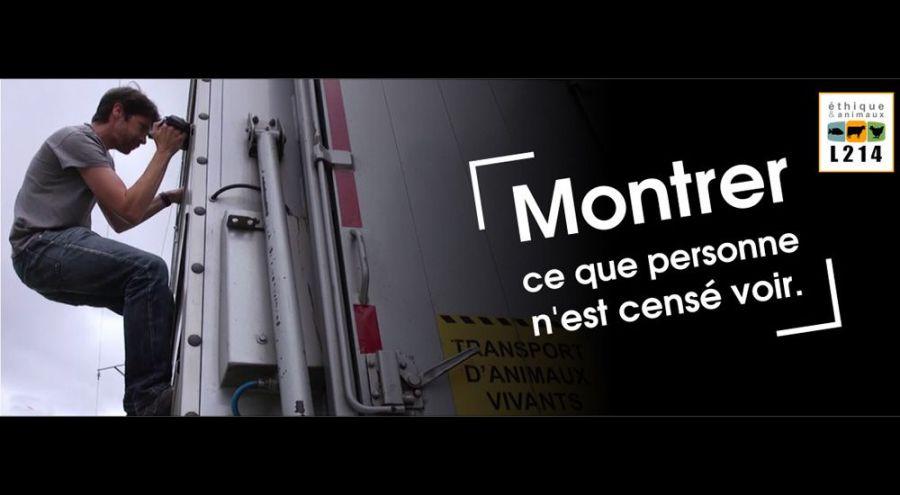 Militant l214 filmant l'intérieur d'un camion de transport d'animaux