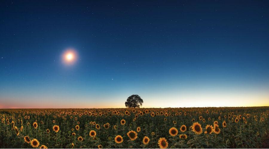 Permaculture : comment jardiner avec la lune ?