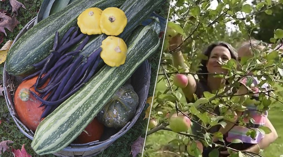 Cette famille canadienne vit en autosuffisance alimentaire