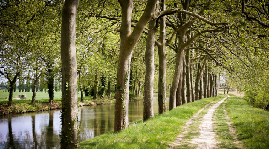 un chemin en pleine nature