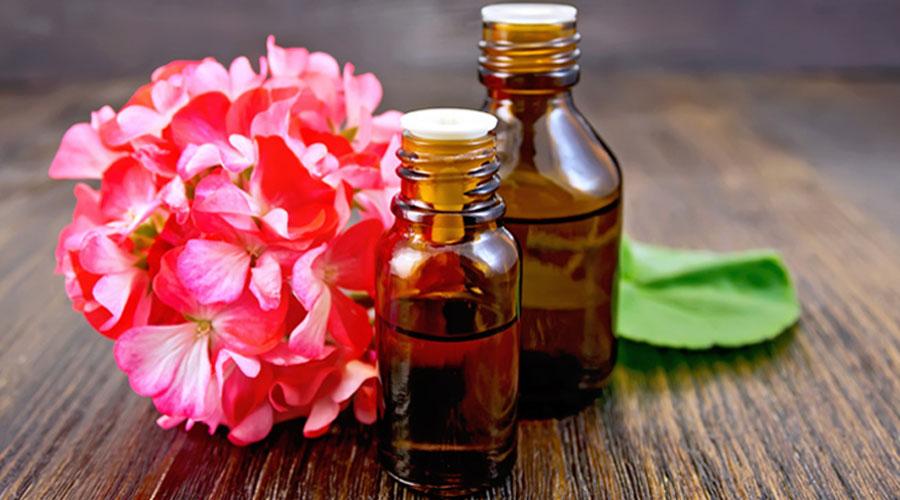 Le géranium Bourbon une huile essentielle prodigieuse pour la peau