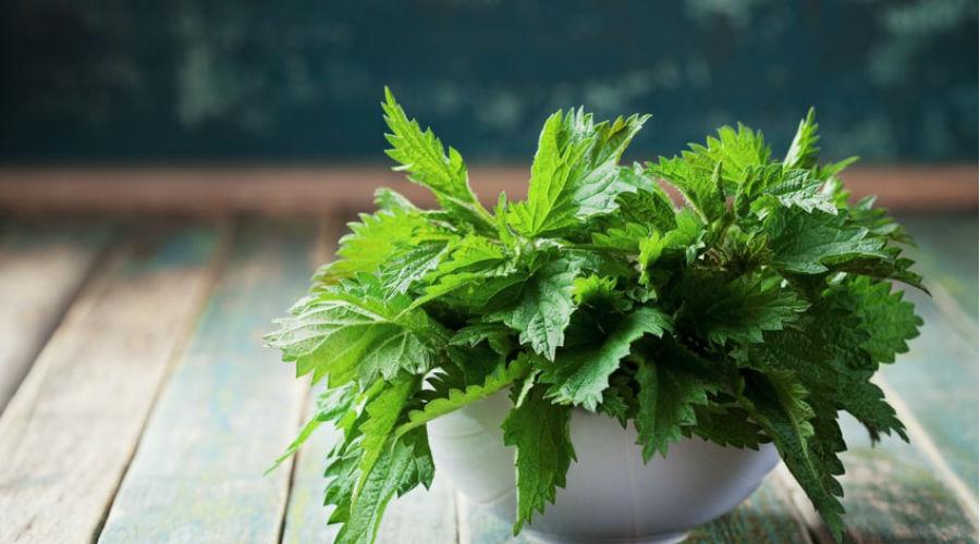 L'ortie, une plante à ne plus craindre | Bio à la une