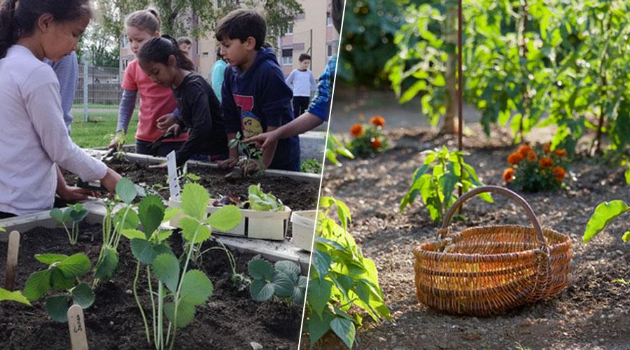À Strasbourg, les élèves jardinent pour protéger la nature