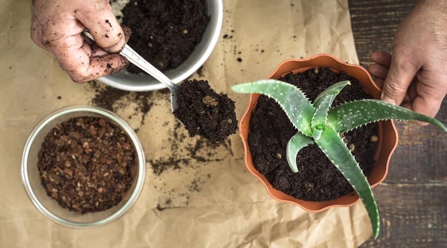 4 recettes de fertilisant naturel pour votre jardin