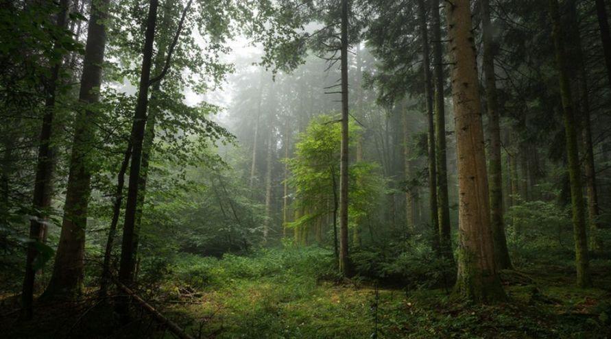 Déforestation : disparition accélérée des forêts vierges de la planète