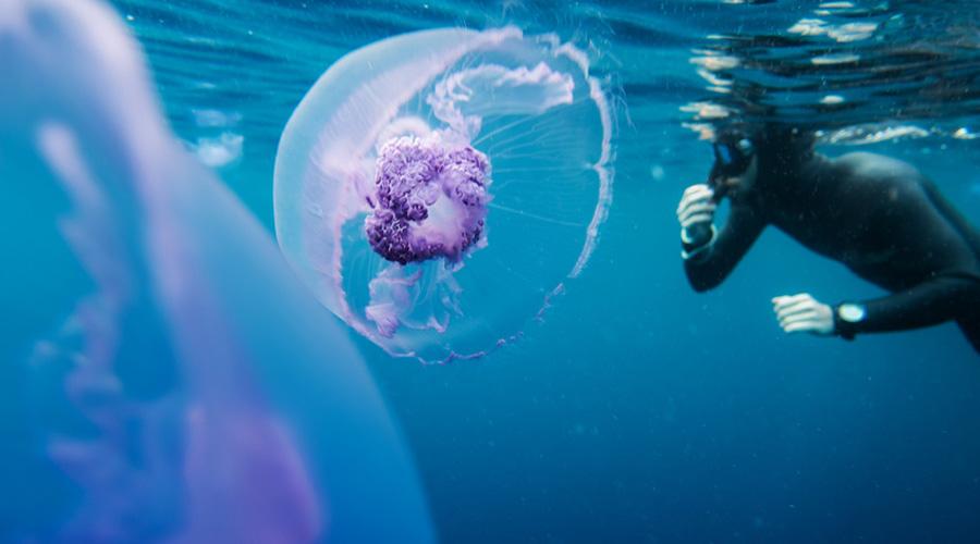 méduse et un nageur