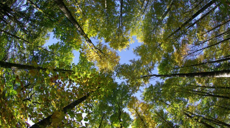 arbres dans la nature environnement