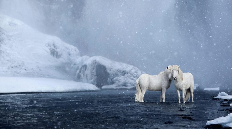 Islande : les magnifiques photos de chevaux de Drew Doggett