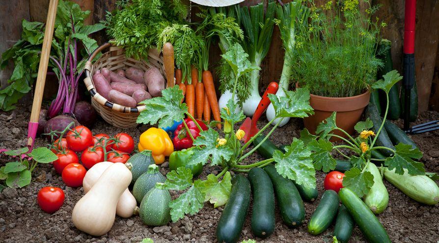 fruits et légumes terre