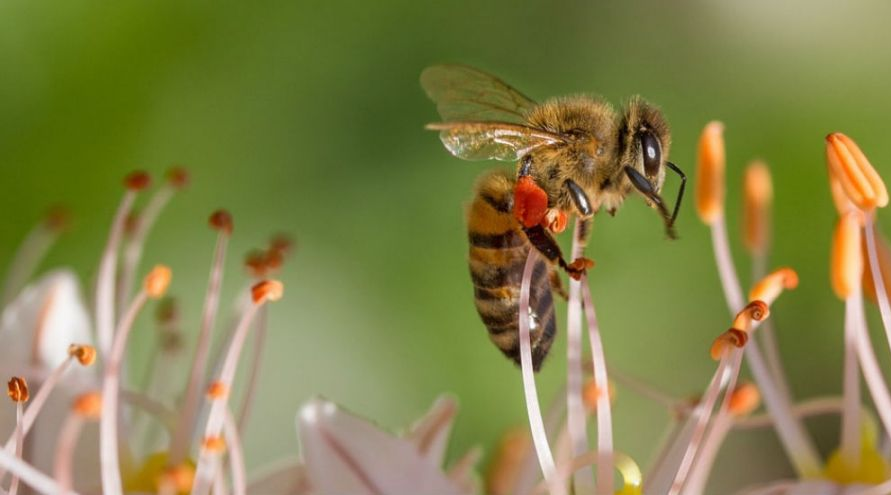 Pesticides : les néonicotinoïdes interdits à partir du 1er septembre