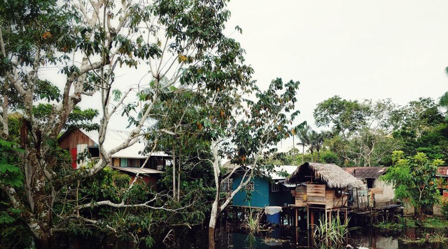 habitat Amazonie