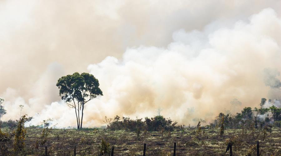 Déforestation Brésil