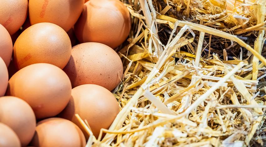 L'élevage de poules en cage est en perte de vitesse