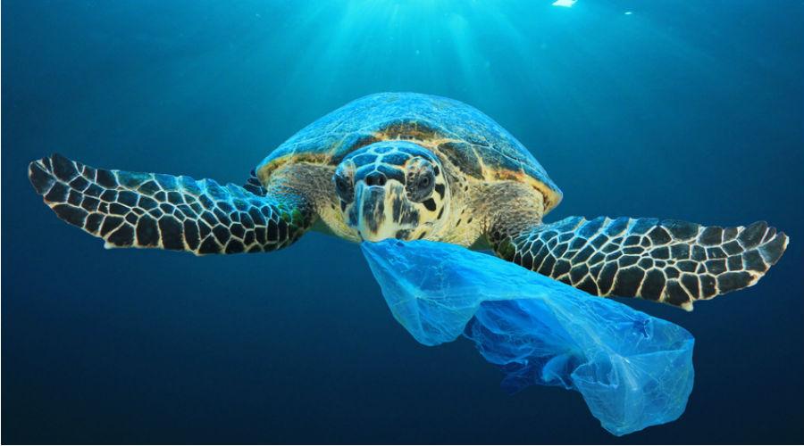 tortue mer plastique