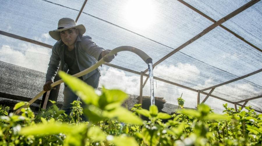 Faire pousser des légumes dans le désert le plus aride du monde, c'est possible !