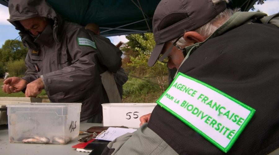 La fusion des offices de la chasse et de la biodiversité soumise au Sénat