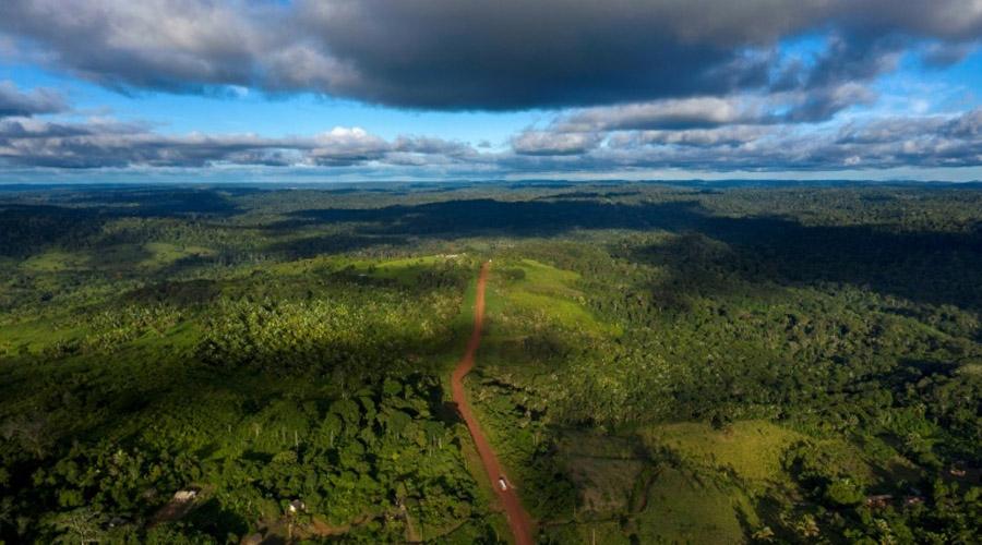 12 millions d'hectares de forêts tropicales détruites en 2018