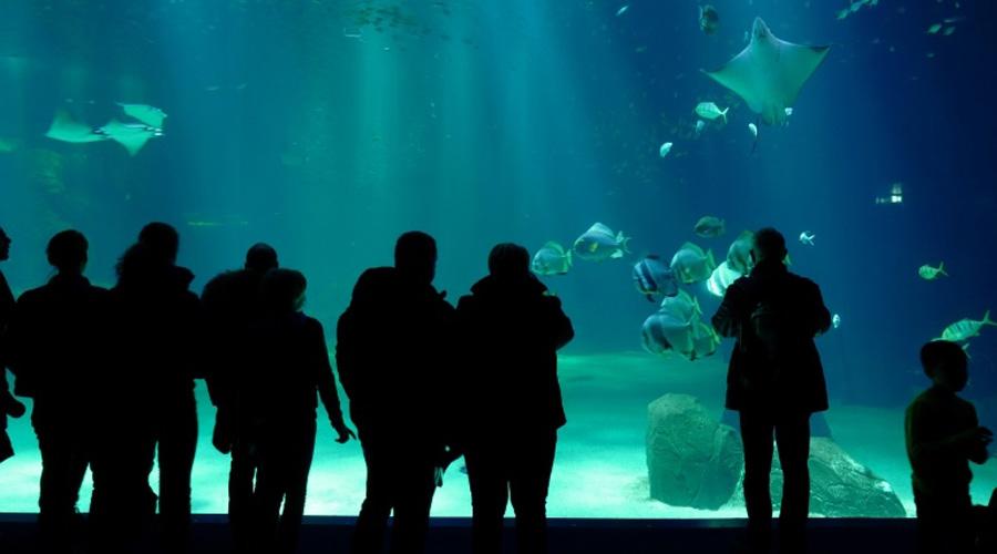 Boulogne-sur-mer : tous les requins-marteaux sont morts à Nausicaà